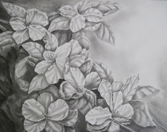 Apple Blossoms Drawing, Original Graphite Drawing,  Matted, 16 x 20 inches,  Graphite Flower Drawing, Apple Blossom Art, Apple Flower Art
