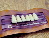 CREEPY SALE: 2x1 Pay one, get two. Acrylic human teeth. Perfect for your crazy crafts. Lower teeth