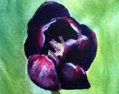 Black Tulip Original Miniature Watercolor Painting - ACEO - ATC