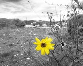 Grey And Yellow Decor, Nature Photography, Abstract, Black And White, Grey, Bright, Flower Photograph, Fall Decor, 5x7 Print