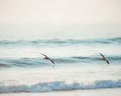 Pastel Blue Ocean Photography, Ocean Waves, Pelicans, Light Blue, Ocean Wall Art, Sea, Carlsbad California Coast