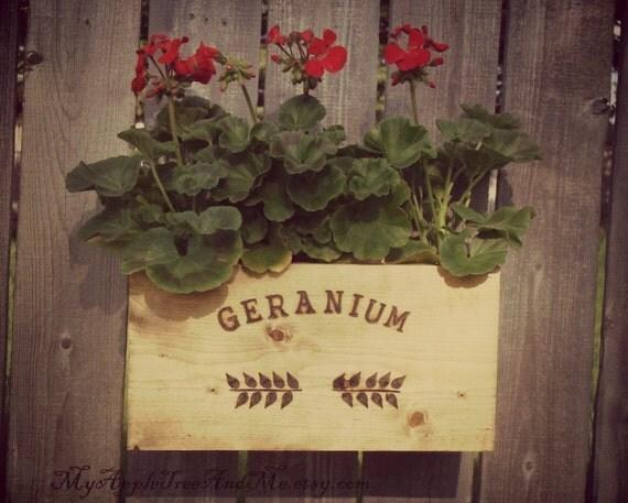 Geranium Flower Crate