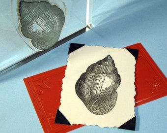 Seashell Clear Polymer Rubber Stamp shell
