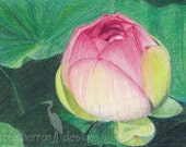 flower drawing- Lotus Bud - colored pencil art print