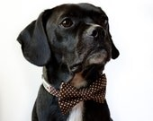 Coffee Brown Polka Dot Dog Bow Tie Collar