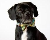 Blue Yellow Stripes Dog Bowtie Collar