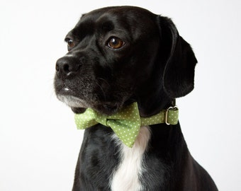 Celery Green Polka Dot Bow Tie Dog Collar