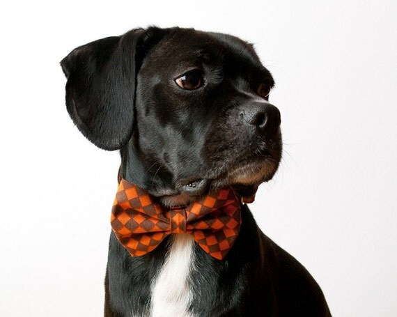 Pumpkin Checks Bow tie Dog Collar