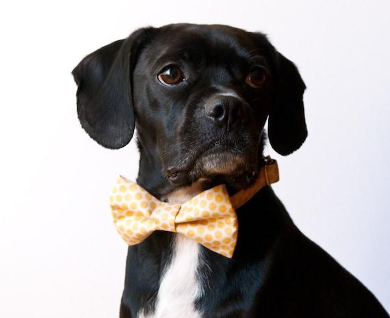 Sunshine Honeycomb Bowtie Dog Collar