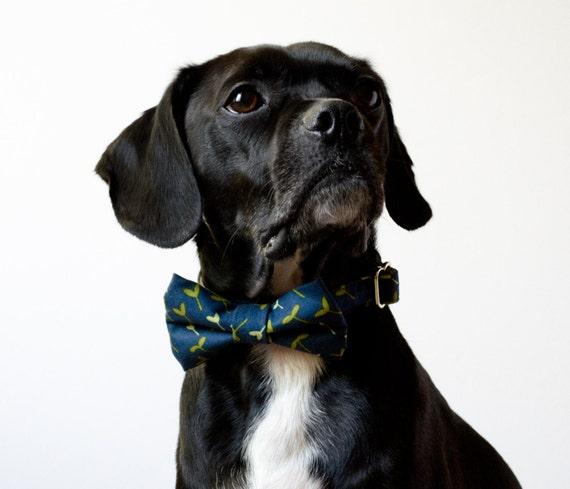 Navy Sprout Dog Bowtie Collar