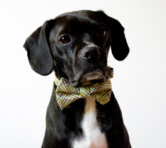 Pastel Green Plaid Dog Bow Tie Collar
