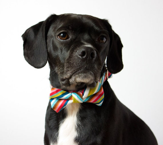 Colorful Stripes Bowtie Dog Collar
