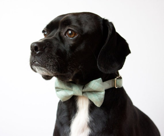 Pastel Blue Plaid Bow Tie Dog Collar