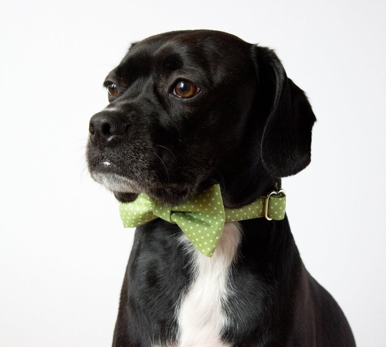 Celery Green Polka Dot Bow Tie Dog Collar