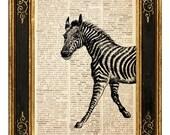Zebra 1 - Vintage Page Art Print FREE SHIPPING WORLDWIDE