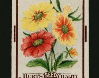 1910s Calliopsis Antique Century Old Flower Seed Pack Garden Art
