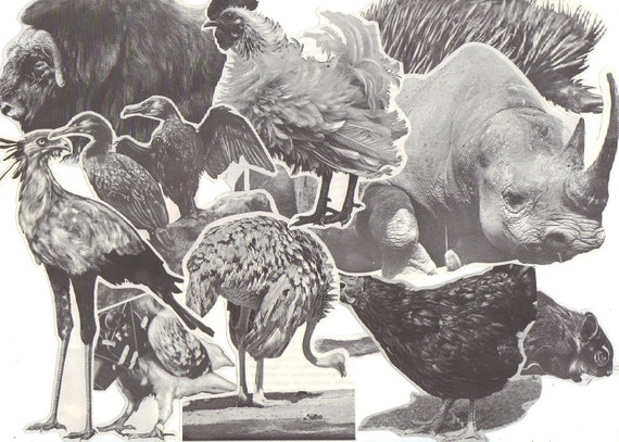 12 Mixed ANIMAL BIG Clippings - Vintage paper cut-outs for collage
