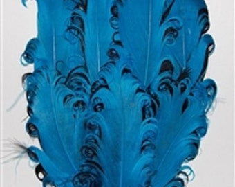 Turquoise and Black Nagorie Feather Pad