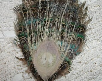 Blue, Green and Brown English Ringneck Pheasant Feather and Bleached Peacock Eye Fascinator - Choose headband, barrette, comb or clip