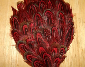 Red Dyed Almond Pheasant Pad