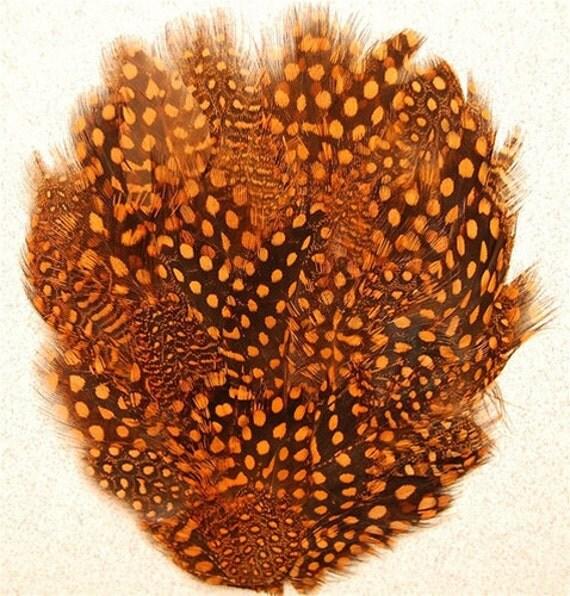 Orange Guinea Feather Pads