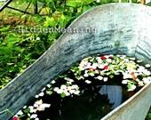 Rose Petal Bath - Fine Art Photography, 4x6 / 4x4