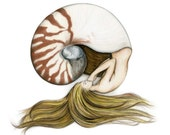 8x10 inch Signed Mermaid Sleeping in Nautilus Shell Art Print Colour Pencil Drawing Coastal Home Beach House Nautical Decor
