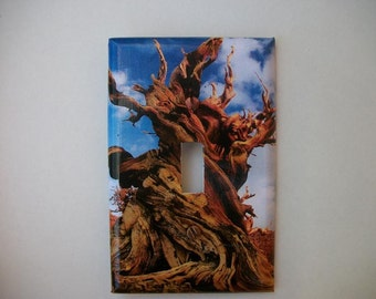 SWITCH PLATE COVER - Twisted Tree