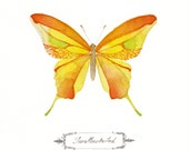 ORIGINAL Butterfly  Swallowtailed Watercolor Painting