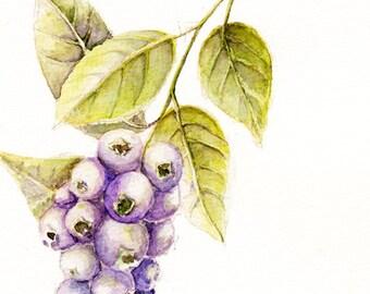 ORIGINAL Blueberries Watercolor Painting