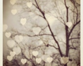 Bokeh Hearts and Branches and a Cloudy Gray Sky