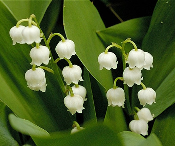 Lily Of The Valley 10 or 15 oz Linen Water / Fabric - Room Freshener - Neutralizes Pet & Household Odors - Alcohol Free - Sweet Fresh Floral