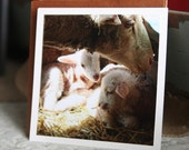 beloved - lamb photography - fine card (and farm fresh)