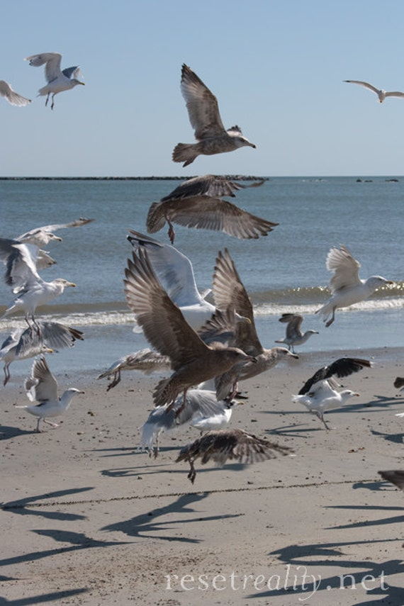 "Ocean Seagulls Beach Summer Photograph 8.5"" x 11"""