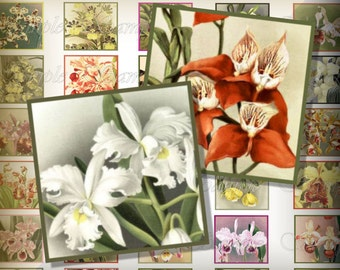 Vintage Orchids Digital Collage Sheet 1 Inch One Inch Scrabble Tiles Digital Pendant Jewelry Vintage Orchid Flowers 203