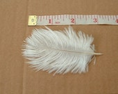 Lot of 3 Baby Ostrich Feathers - White