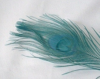 Dyed Peacock Feather - Teal