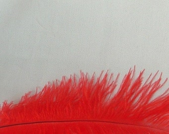 Red Ostrich Feathers