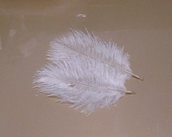 Lot of 100 Baby Ostrich Feathers - Champagne - approx 2 inch