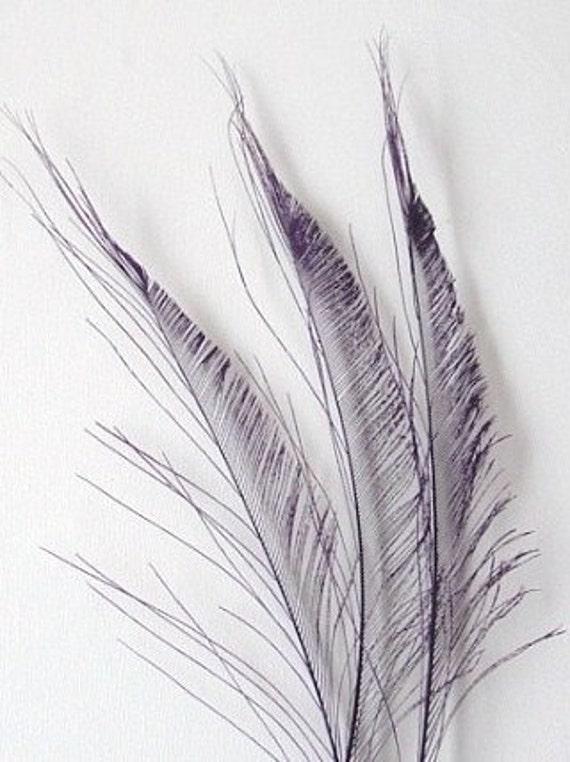 Peacock Swords - Purple