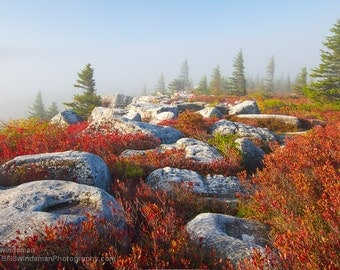 Photograph  Fall Morning at Dolly Sods West Virginia - 8 x 12