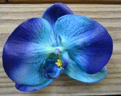Orchid flower hair clip in BLUE - itsashorething