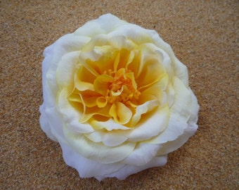 LARGE  white and yellow ROSE  flower HAIR clip