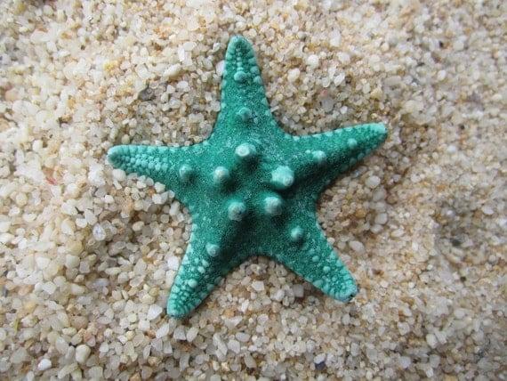 Small dyed green knobby starfish bobby pin HAIR clip