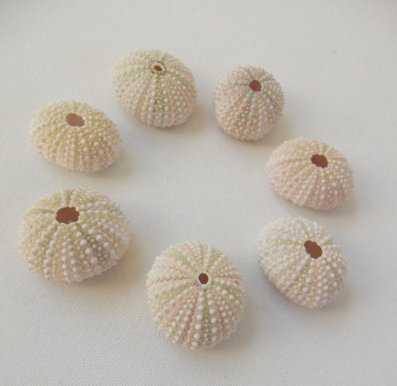 Natural Pink Urchin Shell Set No. 15 - shells for crafts or decoration