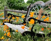 Don't Sit on the Poppies Fine Art Photograph - Northern California Poppies - Nature - Botanical - Peaceful - Flowers
