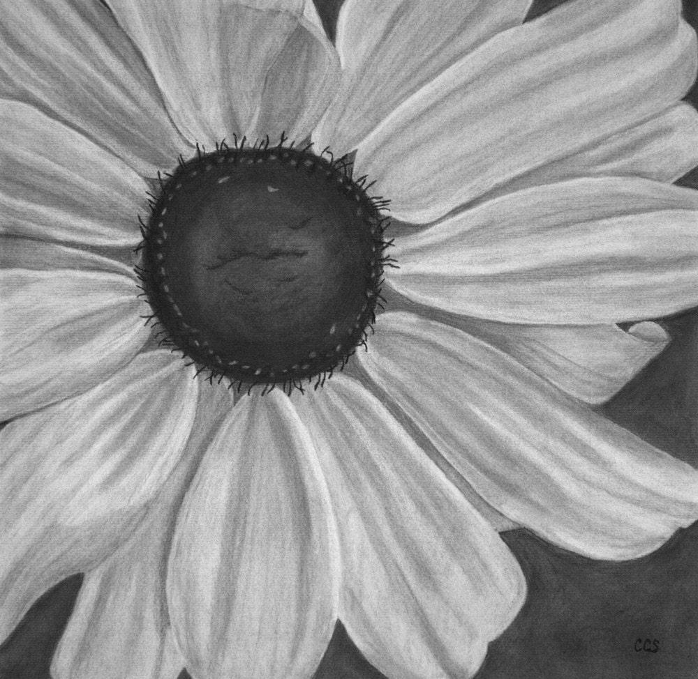 Easy Flower Charcoal Drawings Of Flowers Tookogie