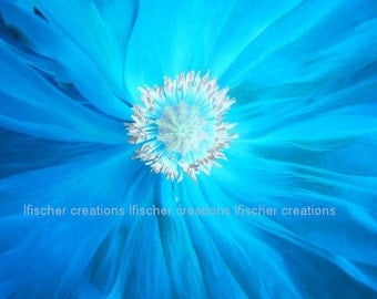 Blue Poppy Macro Digital Download Wall Art Home Decor Fine Art Photography