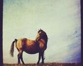 Equine - 4x4
