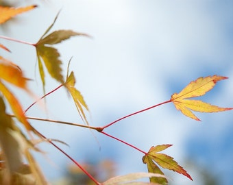 Autumn is here now - Fine Art Photography - Wall Décor - Nature Photography